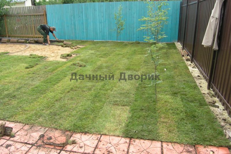 Как лучше сделать газон